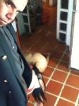 pareja dominante del exterior  busca perro sumiso financiero
